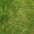 Green grass texture — Stock fotografie