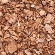 Wooden mulch ground fragment — Stock Photo