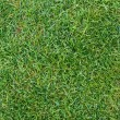 Fresh green grass texture — Stock Photo #33087167