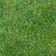 Stock Photo: Fresh green grass texture