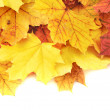Maple-leaf leaves composition — Stock Photo