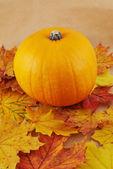 Orange pumpkin against maple-leaf background — Stock Photo