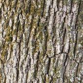 Eski ağaç kabuğu doku parçası — Stok fotoğraf