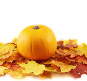 Orange pumpkin against maple-leaf composition — Stock Photo