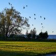 Flock of birds flying to the tree — Stock Photo