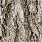 Old tree bark texture fragment — Stock Photo