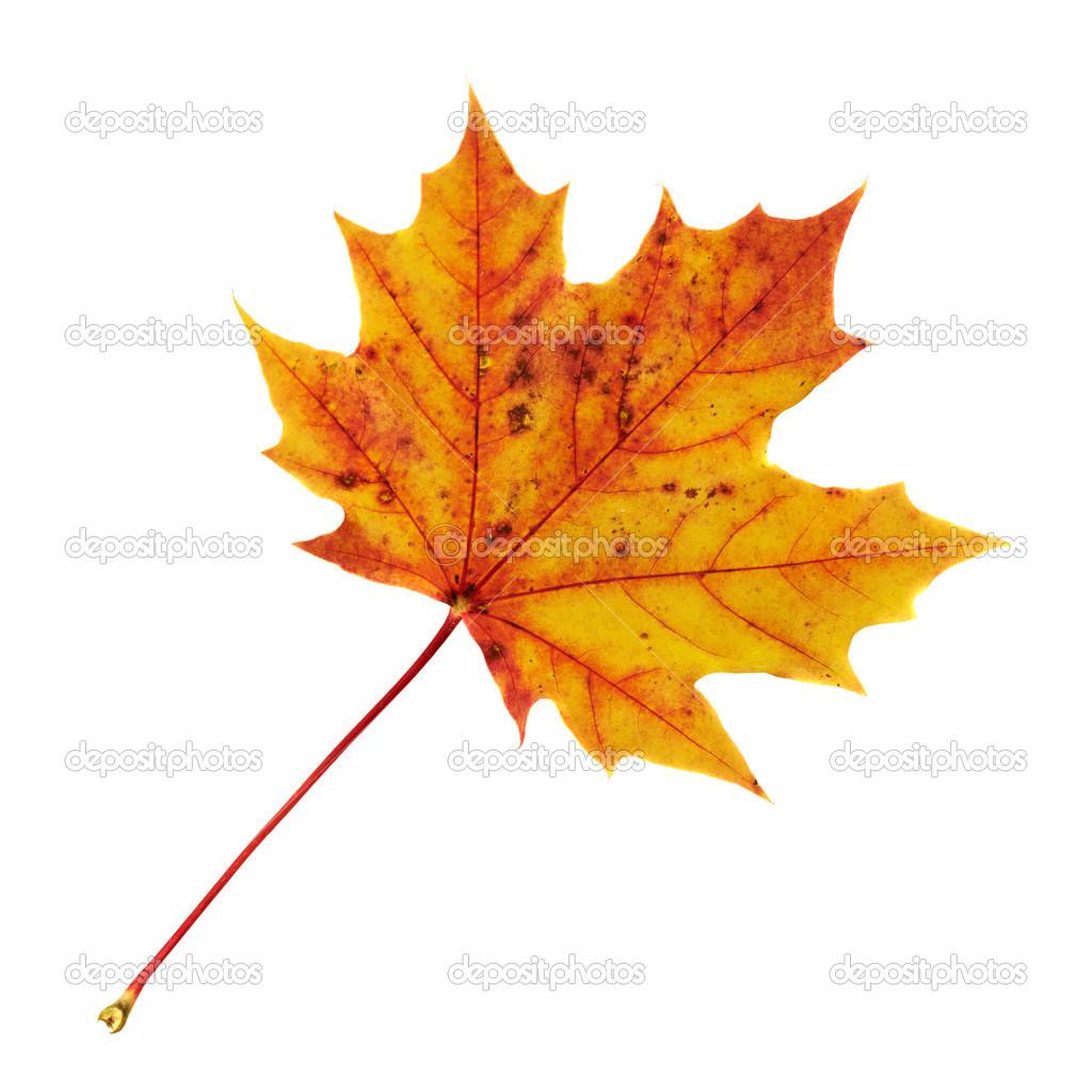 Хентай листья клёна 22 фотография