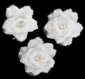 Artificial white roses isolated — Stock Photo