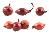 分離した赤玉ねぎ — ストック写真
