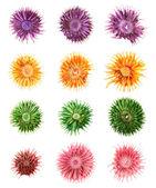 Dried medley potpourri flowers isolated — Stock Photo