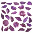 Dried medley potpourri leaves isolated — Stock Photo #47061977