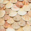 Sea shells texture — Stock Photo