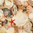 Surface covered with multiple shells — Stock Photo