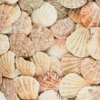 Surface covered with shells — Stock Photo