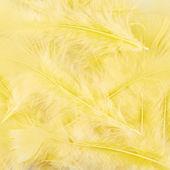 Composição de penas amarelas — Fotografia Stock