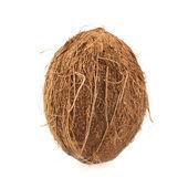 Frutta cocco intero isolato — Foto Stock