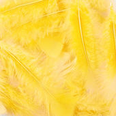 Yellow feathers composition — Stock Photo