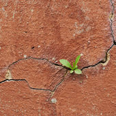 Cracked painted wall fragment — Stock Photo