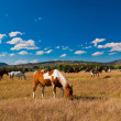 Horses enjoy the peace  in Yellowstone National Park, USA — Foto de Stock