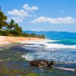 Turtle enjoying the sunshine in the beach in Oahu,Hawaii - Stock Photo