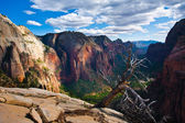 Beautiful Landscape in Zion National Park,Utah — Stock Photo