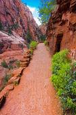 Angel Landing Trail in Zion National Park,Utah — Stock Photo