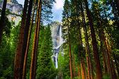 Cascate di yosemite dietro sequoie nel parco nazionale di yosemite, california — Foto Stock