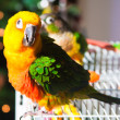 Cute Sun Conure — Foto Stock