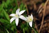 Bright white flowers — Stock Photo