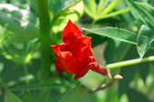 Bright red flower — Stockfoto
