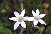 Bright white flowers — Stockfoto