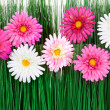Stock Photo: Flowers with grass