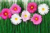 Flores con hierba — Foto de Stock