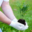 Man hands holding young plant — Stock Photo