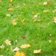 Yellow maple leaves on grass — Stock Photo