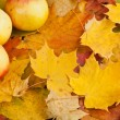 Fallen autumn maple leaves and apple — Stock Photo #34221219