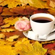 White cup of tea with red rose and maple leaf — Stock Photo