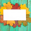 Autumn leaves and paper — Stock Photo