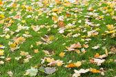 Opadłych liści tło — Zdjęcie stockowe