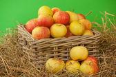 Korg med äpplen på gröna — Stockfoto