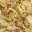 Dried Linden Flowers — Stock Photo
