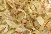 Getrocknete linden-blüten — Stockfoto