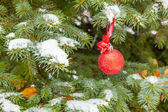 Fir-tree  with a Christmas toy — Stock fotografie