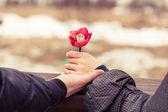 Händer som håller blomma — Stockfoto