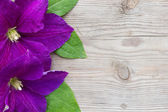 Purple Clematis on wooden background — Stock Photo