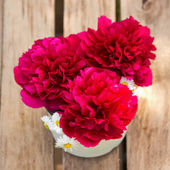 Red peonies in vase on wood background — Stock Photo