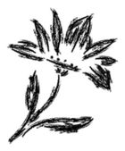 In pencil black and white flower — Stock Photo