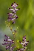 Wildflower — Stock Photo