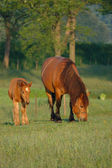 Mare with foal — Stock Photo