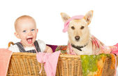 Baby and dog in the laundry basket — Stock Photo